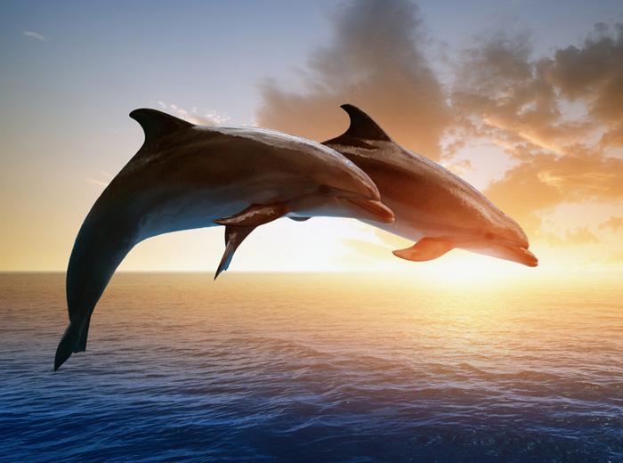 delfine brauchen schutz vor touristen artundreise. Black Bedroom Furniture Sets. Home Design Ideas
