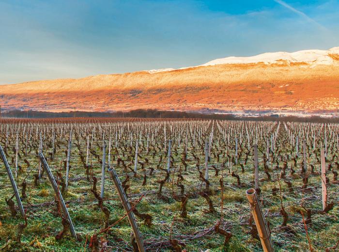Wein –Genf steht vor einem Jahrhundertjahrgang
